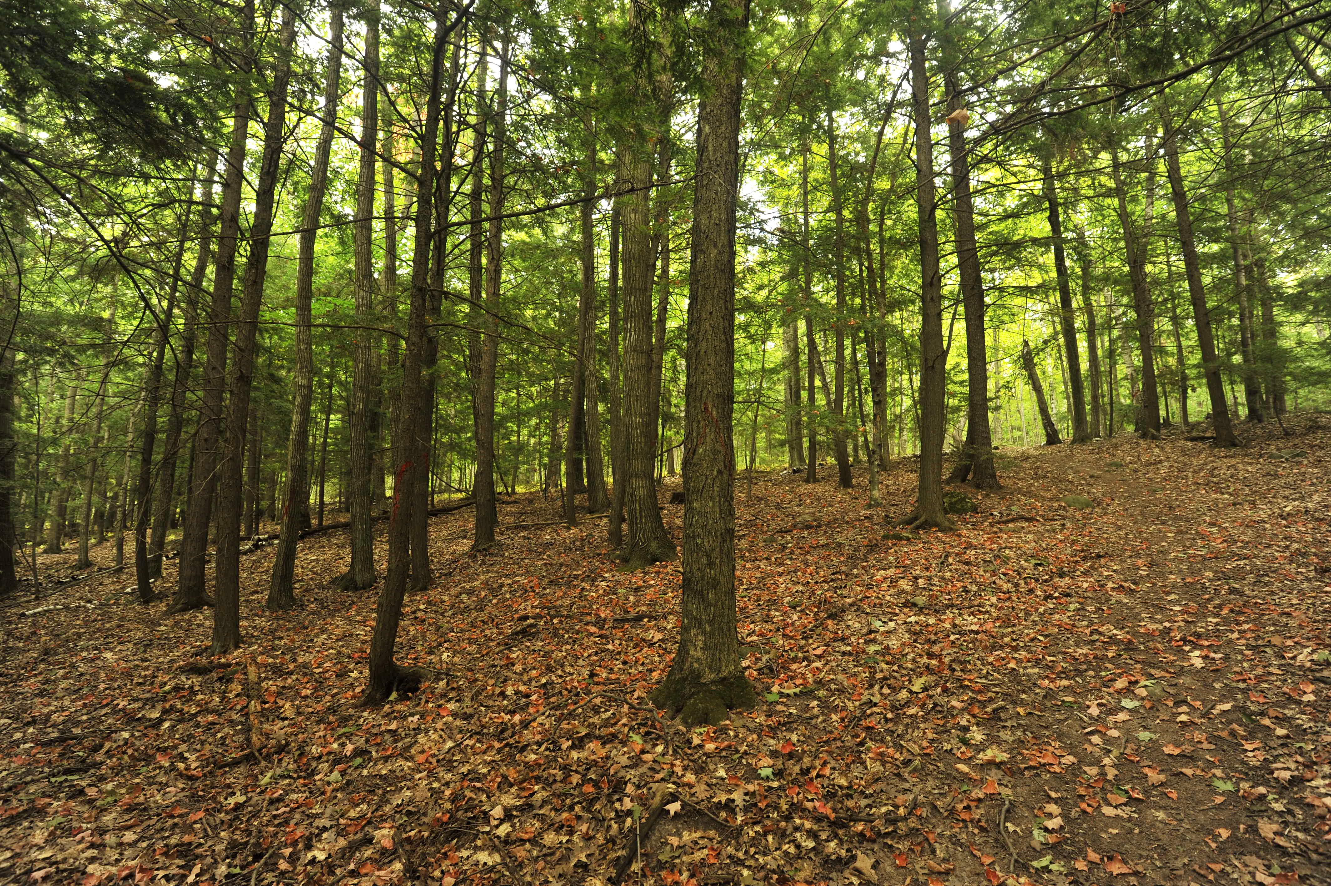 Lautenbach-Woods-by-Zak-LaCrosse-lr_ZLC3007adj